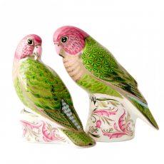 RCD Lovebirds